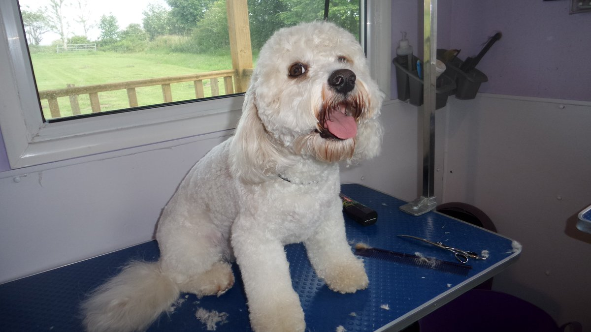 Areas Of Dog Grooming Techniques