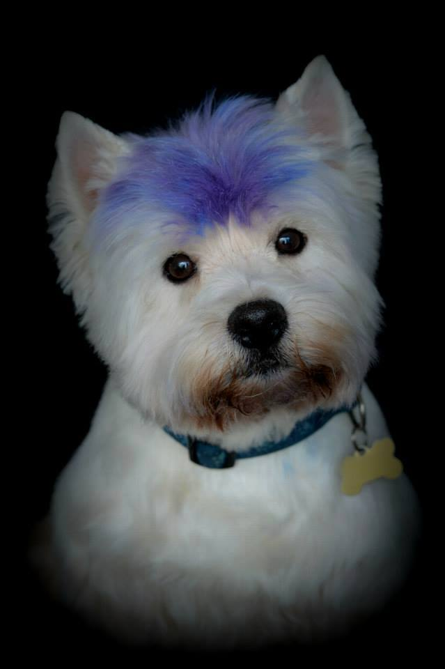 Blog dog and bone dog grooming services thirteen years ago we struggled to find a dog groomers that worked the way we envisaged for our west highland terriers hamish and macbeth i went to do a solutioingenieria Images