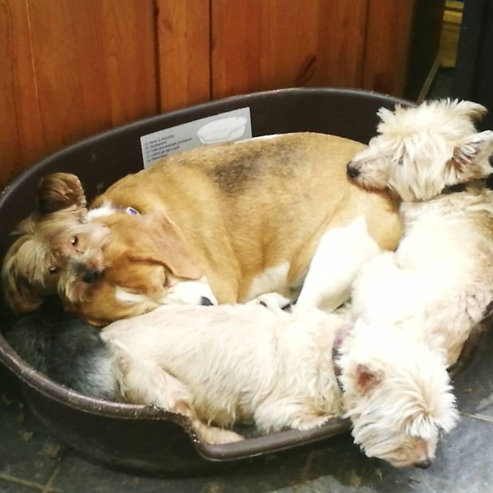 Pdsa Dog Rescue Centres