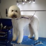 How muc does dog grooming cost. Cost of grooming. Grooming poodle cost